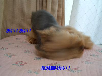 CIMG6522blog.jpg