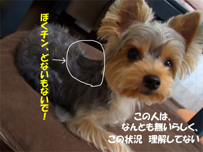 CIMG6531blog.jpg