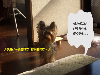 CIMG7304blog.jpg