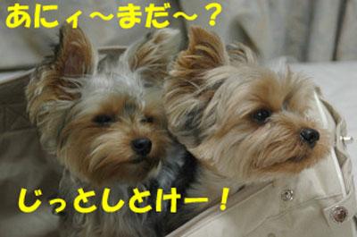 DSC_6144blog.jpg