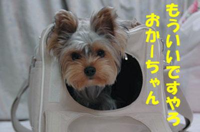 DSC_6152blog.jpg
