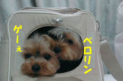 DSC_6161blog.jpg