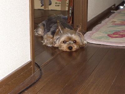 blogCIMG4659.jpg