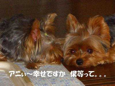 tsuyablog-CIMG6221.jpg