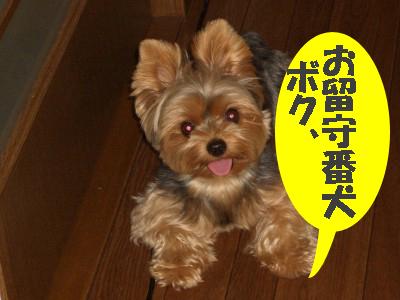 tsuyablog-CIMG6298blog.jpg