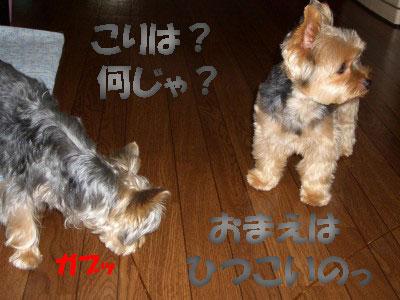 tsuyablog-CIMG6599.jpg