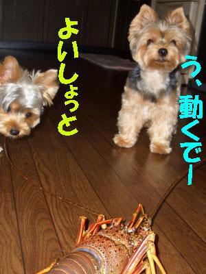 tsuyablog-CIMG6600.jpg