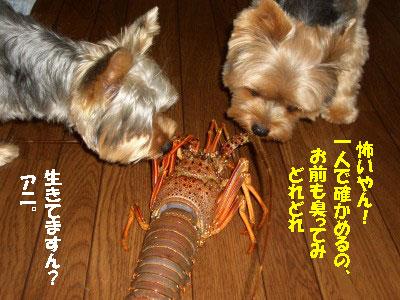 tsuyablog-CIMG6601.jpg