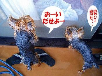 tsuyablog-tsuyablog-CIMG6209.jpg