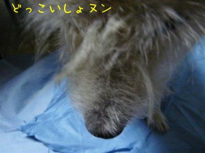 3Hu8_oHH.jpg