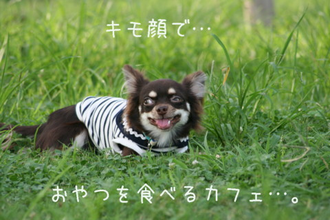 IMG_2255-001.jpg