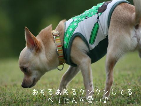IMG_2807-001.jpg