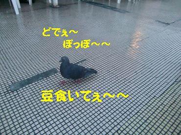 CIMG8189.jpg