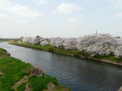 20100406いろは橋の桜 006