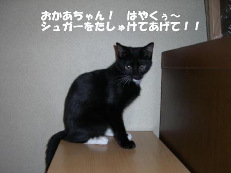 20051030133532.jpg