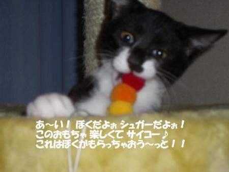 20051104113338.jpg