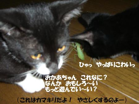 20051105115326.jpg