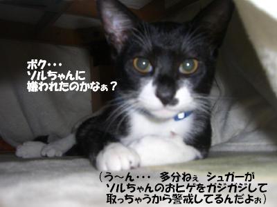 20051204162709.jpg