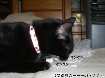 20060422.jpg