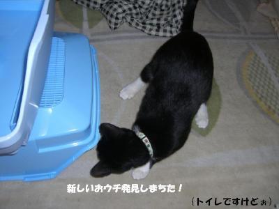 20060427.jpg