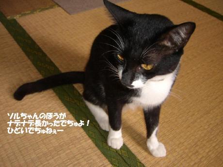 20060805.jpg
