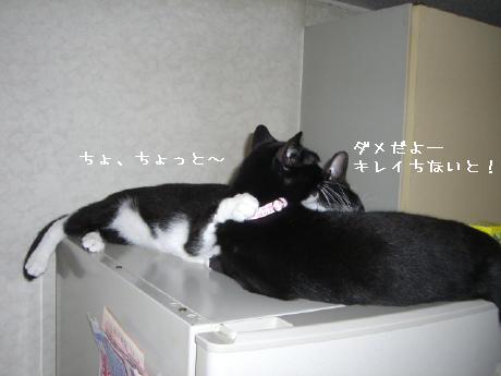 20060823.jpg