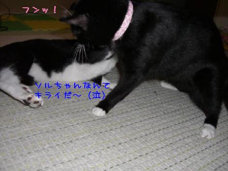 20060921.jpg