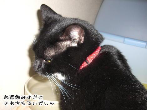 20061220.jpg