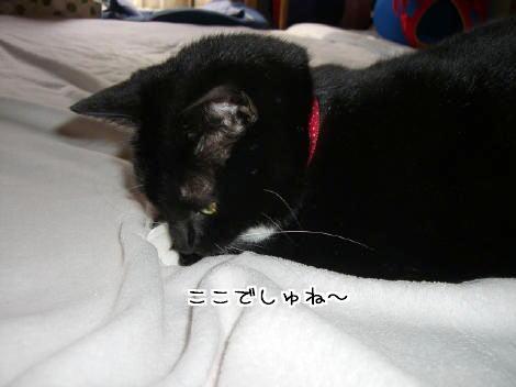 20070326.jpg