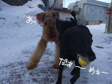 2009.01.01今年の4ワン②