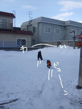 2009.01.01今年の4ワン③