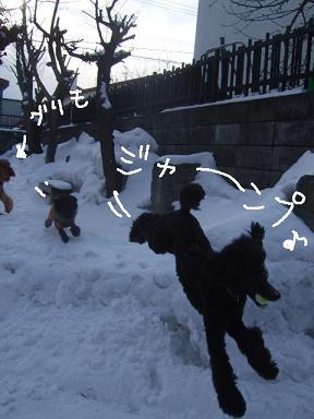 2009.01.01今年の4ワン⑤