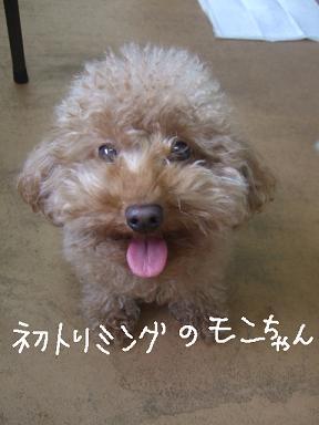 2009.01.05  プードルモンちゃん①