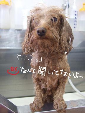 2009.01.05  プードルモンちゃん②