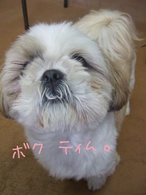 2009.01.11  ティムくん①