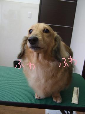 2009.01.18  なみへいくんと玉ちゃん③