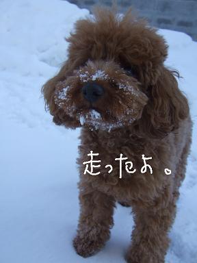 2009.01.25  くるみちゃんいらっしゃい②