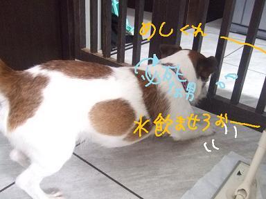 2009.01.28  小太郎抜糸まで①