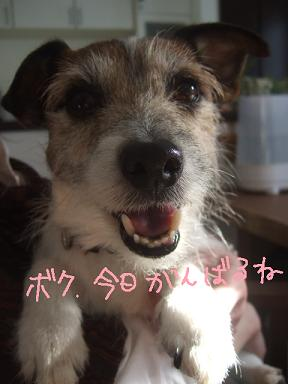 2009.01.28  小太郎抜糸まで③