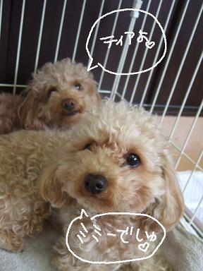 2009.01.29  ティア&ミミー①