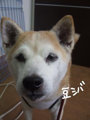 2009.01.30  ネネちゃん②