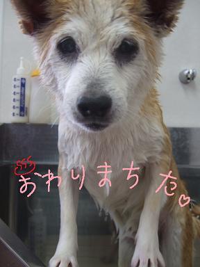 2009.01.30  ネネちゃん④