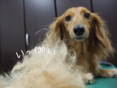 2009.02.05 マロンちゃん②