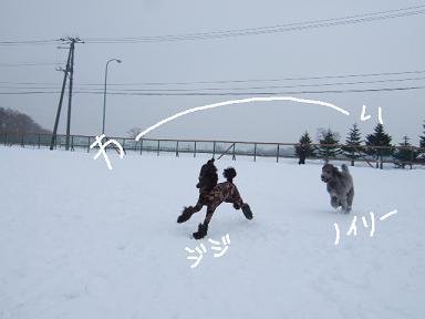 2009.02.05  DRジジ&ノイリー①