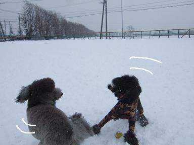2009.02.05  DRジジ&ノイリー②
