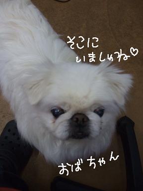 2009.02.06  めぐちゃん①