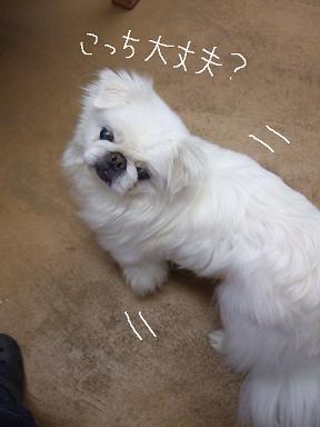 2009.02.06  めぐちゃん②