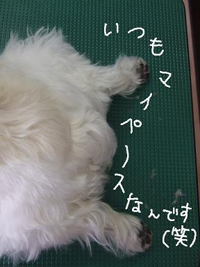 2009.02.06  パフ&クリン⑤