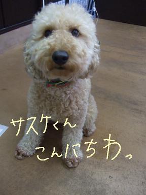 2009.02.08  さすけくん①