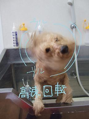 2009.02.08  さすけくん②